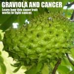 גרביולה לשמירה על תאי הגוף – האם פרי האנונה יכול להילחם בסרטן?