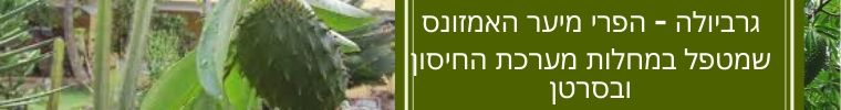 צמח הגרביולה לטיפול במערכת החיסונית